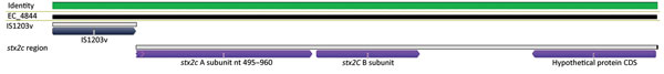 Alignment of genomic region from a representative isolate (EC_4844) showing insertion of IS1203v in the Shiga toxin 2 (stx2) gene region of Shiga toxin−producing Escherichia coli associated with an agricultural show, Brisbane, Queensland, Australia, 2013. CDS, coding DNA sequence.