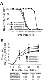 Thumbnail of Characterization of influenza B viruses detected in Laos, February 2016. A) Thermostability of neuraminidase (NA) determined after viruses were incubated for 15 min at 4°C or at 30°C–57°C. NA enzyme activity was determined by a fluorescence-based assay (4). B) Replication kinetics of influenza B viruses in fully differentiated human primary NHBE cells that were inoculated with the designated viruses (multiplicity of infection 0.001). Apical washes were taken at indicated times after
