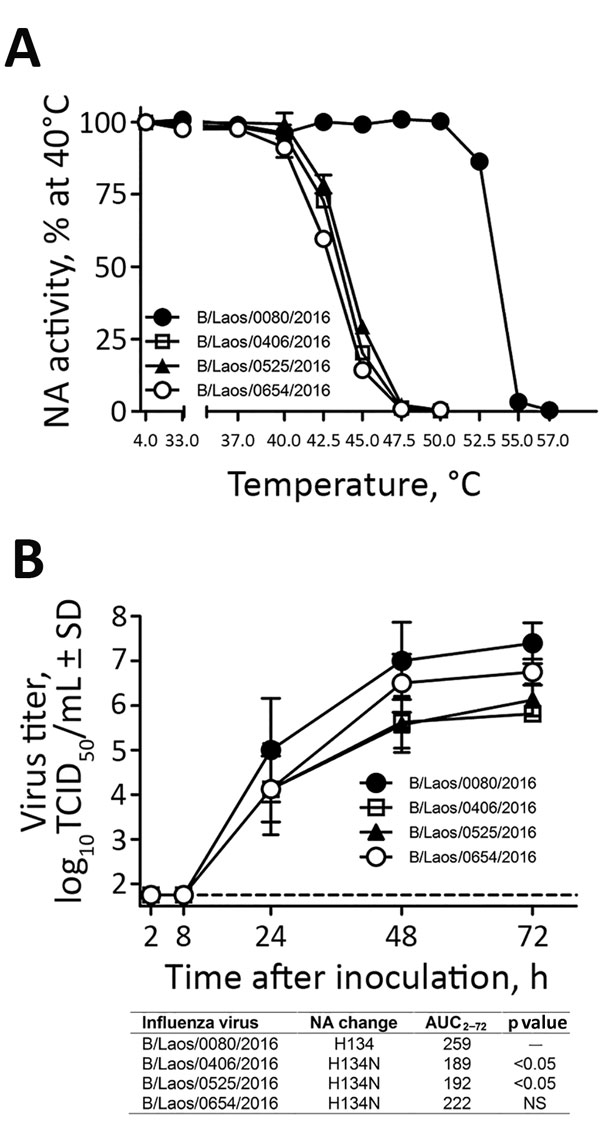 Characterization of influenza B viruses detected in Laos, February 2016. A) Thermostability of neuraminidase (NA) determined after viruses were incubated for 15 min at 4°C or at 30°C–57°C. NA enzyme activity was determined by a fluorescence-based assay (4). B) Replication kinetics of influenza B viruses in fully differentiated human primary NHBE cells that were inoculated with the designated viruses (multiplicity of infection 0.001). Apical washes were taken at indicated times after inoculation,