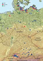 Thumbnail of Highly pathogenic avian influenza A(H5N8) cases in wild birds and outbreaks in poultry holdings (10 backyard holdings, 4 zoos or pet farms, and a few commercial operations) in Germany, November 2016. Circles indicate original locations of outbreaks and isolates.