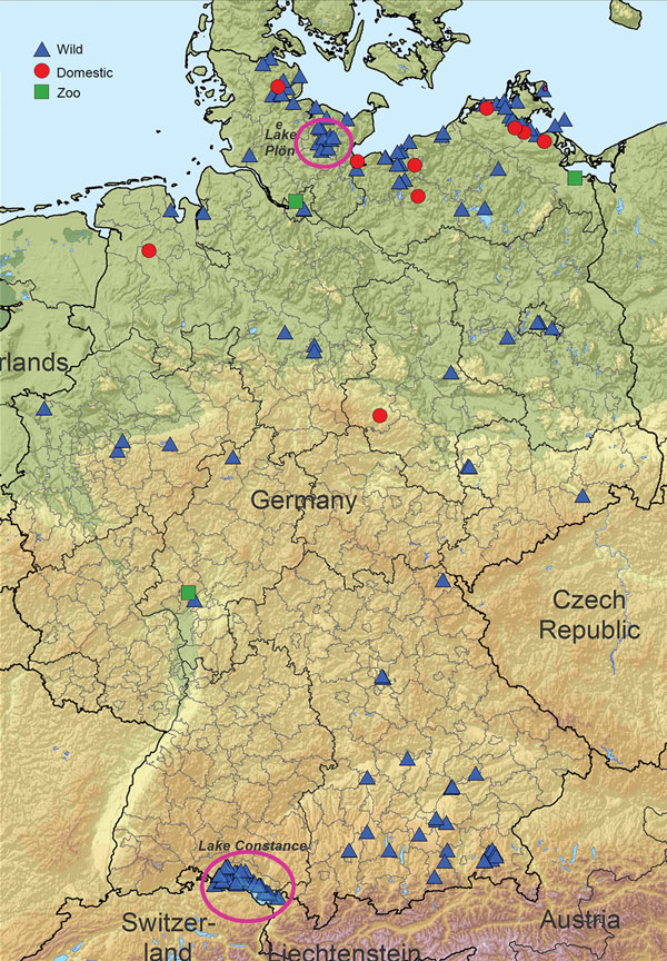 Highly pathogenic avian influenza A(H5N8) cases in wild birds and outbreaks in poultry holdings (10 backyard holdings, 4 zoos or pet farms, and a few commercial operations) in Germany, November 2016. Circles indicate original locations of outbreaks and isolates.