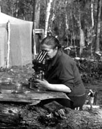Thumbnail of Vera I. Shakhmatova, one of the pioneers of infection experiments with the northern strain of Taenia saginata tapeworms, examining parasitologic specimens during a field expedition in northern Siberia, Russia, 1975. Photograph courtesy of the Institute of Systematics and Ecology of Animals, Siberian Branch of the Russian Academy of Sciences.