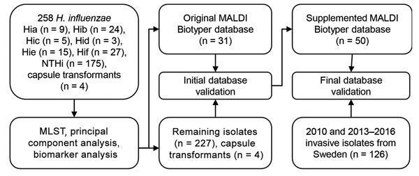 Culture collections and methods used in this study for capsule typing of Haemophilus influenzae by MALDI-TOF mass spectrometry. An evaluation set of H. influenzae isolates of all capsule types from diverse geographic origins and time periods and isogenic capsule transformants (30) were used to investigate capsule type-specific differences in MALDI-TOF mass spectra. MLST was used to ensure adequate coverage of different genetic lineages of encapsulated H. influenzae. Reference isolates from the e