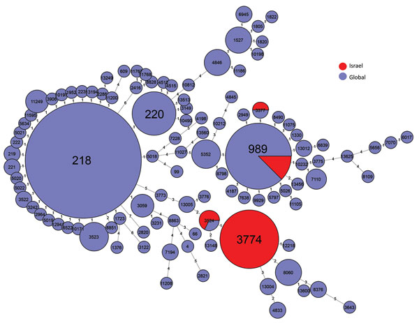 Multilocus sequence typing comparison of Streptococcus pneumoniae serotype 12F serotype isolates from Israel and globally.
