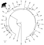 Thumbnail of Phylogenetic tree of rhinovirus C variants. The tree was constructed from a codon-based alignment (6,234 positions) of the new chimpanzee-derived sequence identified in the Kanyawara chimpanzee community, Uganda, 2013 (indicated by the asterisk and chimpanzee silhouette), and all human-derived RV-C complete polyprotein gene sequences available in GenBank as of December 18, 2016, with rhinoviruses A and B from the RefSeq database included as outgroups. We created alignments using the