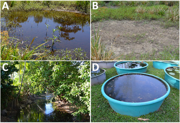 Sample locations for detection of Mycobacterium ulcerans DNA in Buruli ulcer–endemic area, northern Queensland, Australia. A) Pond where IS2404-positive soil sample was collected at first sampling time in September 2013; B) same location dried out at the end of the dry season in October. C, D) Other water bodies suspected to be linked to M. ulcerans infections, such as creeks (C) or water surfaces near houses (D), showed negative results for IS2404. IS, insertion sequence.