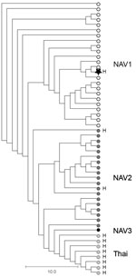 Thumbnail of Phylogenetic relationships among Streptococcus suis serotype 2 sequence type (ST) 25 isolate from a patient in Ontario, Canada (star), and 51 previously described (6) porcine and human serotype 2 ST25 S. suis isolates. The phylogram is based on nonredundant single-nucleotide polymorphism loci identified in the genome of all isolates relative to the S. suis serotype 2 ST25 core genome, as defined by Athey et al. (6). The human isolate from Ontario is genetically more closely related