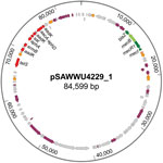 Thumbnail of Circular map of the mecB-carrying plasmid pSAWWU4229_1 from Staphylococcus aureus isolate UKM4229, obtained from a 67-year-old cardiology inpatient who had no signs of infection, Münster, Germany. Arrows indicate annotated genes: the mec-complex is noted in green, antibiotic-resistance genes in red, transposase/integrase genes in orange, other genes with known function in violet, and other genes with unknown function in gray.
