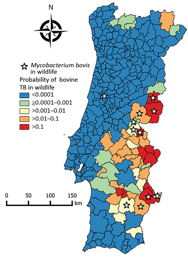 Choropleth map of risk for bovine TB in wildlife, Portugal, showing the probability of the presence of bovine TB in wildlife in counties based on the conditional autoregressive spatial generalized linear mixed model. Stars indicate counties in which Mycobacterium bovis was isolated from free-ranging wildlife, determined on the basis of independent published data (6,29–32). TB, tuberculosis.