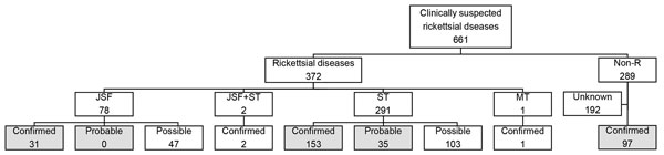 Numbers of patients with rickettsial or nonrickettsial diseases, Japan, 2004–2015. Of 43 patients tested by immunofluorescence and immunoperoxidase assays, 4 fulfilled the criteria for having confirmed JSF, 7 for confirmed ST, and 7 for probable ST. Gray shading indicates the cases included in the main analysis. JSF, Japanese spotted fever; MT, murine typhus; non-R, nonrickettsial disease; ST, scrub typhus.