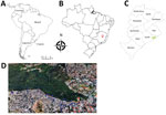 Thumbnail of Area of study of vaccinia virus among domestic dogs and wild coatis, Brazil, 2013–2015. A) Countries in South America where vaccinia virus has been detected in recent years. B) Belo Horizonte (red locator), located in Minas Gerais state, Brazil. C) Regions of Belo Horizonte; green indicates area in wild environment where coatis were captured. D) Google Earth map from 2017 of studied area, showing details of the wild and urban environments. Green dots indicate where coatis were captu