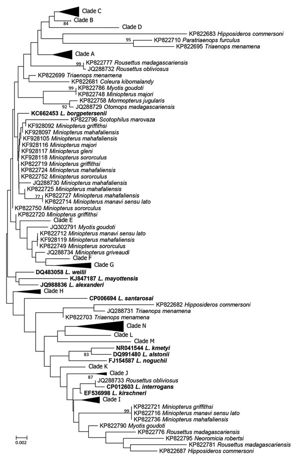Neighbor-joining phylogenetic tree based on rrs2 gene of pathogenic Leptospira isolates from bats, Mengyin County, Shandong Province, China, and reference Leptospira sequences from GenBank that had been previously isolated from bats (boldface). We constructed the tree with bat Leptospira rrs2 sequences (446 bp) from this study and previous studies by using Kimura 2-parameter model with MEGA 7.0 (http://www.megasoftware.net); we calculated bootstrap values with 1,000 replicates. Leptospira detect