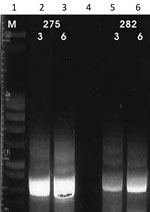 Thumbnail of Results of cpb-EF PCR (14,15) on patient samples identified as belonging to the Leishmania infantum/donovani complex in study of leishmaniasis control programs in northern Syria. Lane 1, step marker; lanes 2 and 3, L. donovani strain 275 with 3 and 6 μL of DNA, respectively; lane 4, negative control; lanes 5 and 6, L. infantum strain 282 with 3 and 6 μL of DNA, respectively.