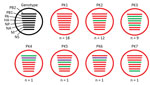 Thumbnail of Genotypes of influenza A(H9N2) viruses from Pakistan. Full genome sequences of 43 contemporary H9N2 avian influenza viruses from Pakistan were used to generate 7 unique genotypes, designated PK1–PK7. Each circle represents a genotype, and n values indicate the total number of viruses assigned to the given genotype. Each line within a circle represents a virus gene segment, and different segment colors between the same gene correspond to a >2% nucleotide difference. Black indicate