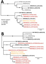 Thumbnail of Maximum-likelihood phylogenetic trees showing 2 distinct FeLV-Pco clades in Florida panthers, Florida, USA. A) Full-genome phylogeny indicates Florida FeLV-A sequences are monophyletic. Historic and contemporary FeLV outbreak sequences reside in 1 clade, and a second clade consists solely of contemporary FeLV outbreak sequences. B) Genotyping sequence phylogeny generated from concatenating 3 regions of ≈100 bp (LTR-gag, gag and env) compare full-genome isolates demonstrated in panel