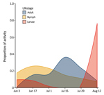 Thumbnail of Seasonal activity of Haemaphysalis longicornis ticks (adults, nymphs, and larvae), Staten Island, New York, USA. Questing ticks were pooled by 2-week collection sessions during June 3–August 23, 2018.