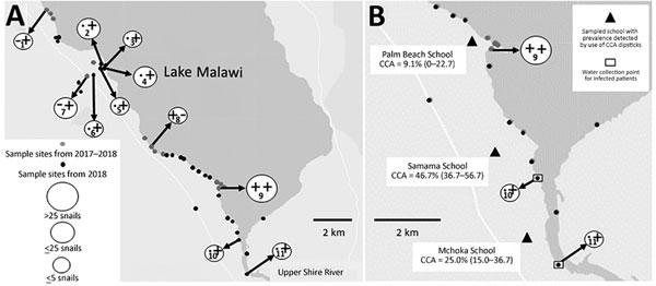 Lake Malawi Africa Map.Figure Em Biomphalaria Pfeifferi Em Snails And Intestinal