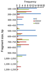 Thumbnail of Allele frequency of msp1 in persons with Plasmodium falciparum infection, North Central Nigeria, 2015–2018. The K1 allele of size 200−250 bp was detected at the highest frequency (n = 18). The next highest detected were the MAD20 allele of fragment size 150–200 bp (n = 11) and the RO33 alleles of fragment sizes 100–150 bp (n = 9) and 650–700 bp (n = 9).