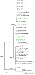 Thumbnail of Molecular phylogenetic analysis of Neisseria meningitidis based on whole-genome sequence data from New York City, New York, USA, and publically available sequences belonging to the multilocus sequence typing group cc11. Isolates are listed with serogroup, year of isolation, source, and study (sp, MSM carriage (for isolates obtained during the 2016 MSM carriage study in New York City), or reference from where they were obtained). N. meningitidis reference sequences are labeled in blu