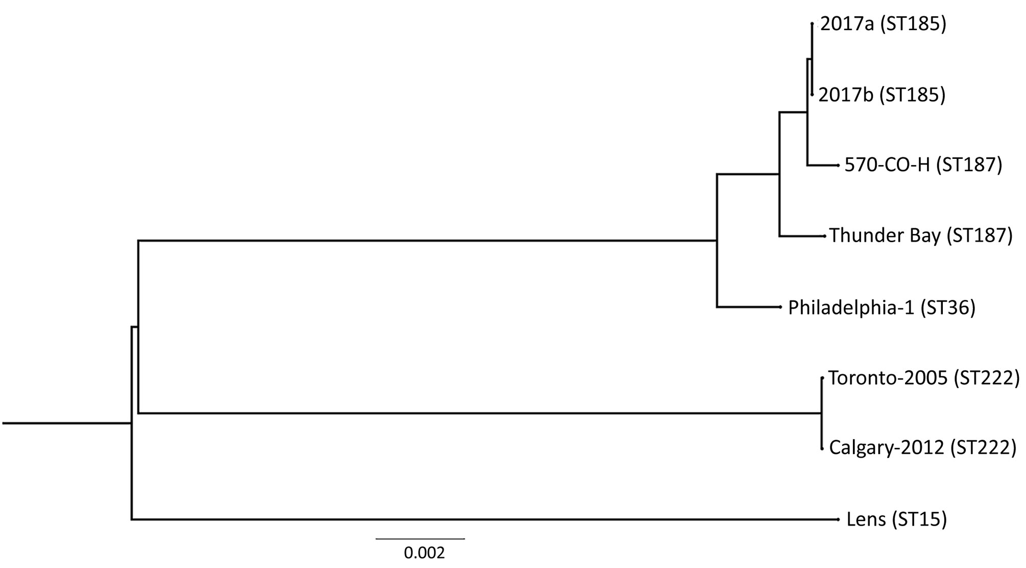 Phylogenetic tree depicting the relationship between Legionella pneumophila isolates identified during investigation of legionellosis in an immunocompromised 3-year-old girl, Calgary, Alberta, Canada, and reference sequences. L. pneumophila core ortholog-based maximum-likelihood phylogenetic tree shows 8 previously published genomes and sequences of the 2 isolates from this study (2017a, clinical isolate from patient; 2017b, environmental isolate from hot tub in patient's home). Tree constructio