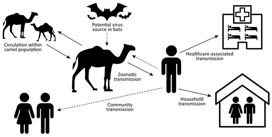 respiratory syndrome coronavirus