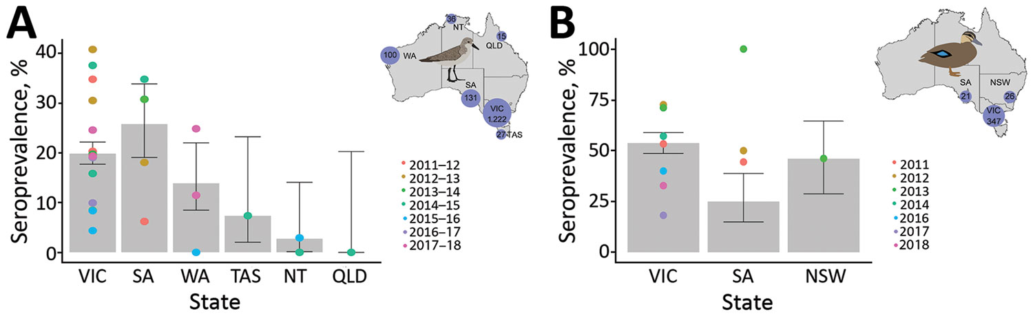 Seroprevalence for nucleoprotein antibodies in red-necked stints and Pacific black ducks, Australia, 2011–2018. A) For red-necked stint, year represents the austral summer period, October–April, when this species has a migratory nonbreeding stopover in Australia. B) For Pacific black duck, year represents calendar year. (No samples were collected in 2015.) Inset maps show the number of samples collected from each species in each state over the course of this study. Error bars represent seropreva