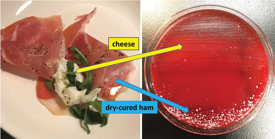 Culture of cheese and dry-cured ham on blood agar medium from investigation of patient with Leuconostoc lactis and Staphylococcus nepalensis bacteremia, Japan. The colonies, cultured from cheese, were identified as L. lactis by matrix-assisted laser desorption/ionization time-of-flight mass spectrometry mass spectrometry; however, the colonies derived from dry-cured ham were identified as S. equorum and S. xylosus but not as S. nepalensis.