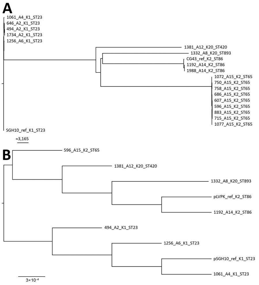 Maximum-likelihood trees of genes from carbapenem-resistant Klebsiella pneumoniae isolates, Singapore, 2013–2015. A) Analysis generated using 63,297 single-nucleotide polymorphism sites in the core genome. The chromosomal sequence of SGH10 (GenBank accession no. CP025080) was used as reference. Isolates are closely related to hypervirulent strains SGH10 and CG43. Scale bar indicates number of single-nucleotide polymorphisms. B) Analysis generated from the alignment of K. pneumoniae virulence pla