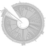 Thumbnail of Phylogenic tree of the capsid gene region of reference HEV-1, HEV-2, HEV-3, and HEV-4 strains within species Orthohepevirus A, representative HEV strains from species Orthohepeviruses B, C, and D, as well as the cutthroat trout virus in the genus Piscihepevirus. The phylogenetic analysis was performed by using MEGA6 software (http://www.megasoftware.net) and the maximum-likelihood bootstrap method based on the Tamura-Nei model (1). The figure represents a cladogram. The HEV-3abchij