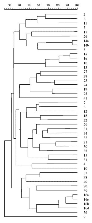 Percentages of genetic similarity between 47 XbaI-PFGE clonal types from 76 Stenotrophomonas maltophilia strains isolated in 25 cystic fibrosis patients of the same unit, 1991-1998.