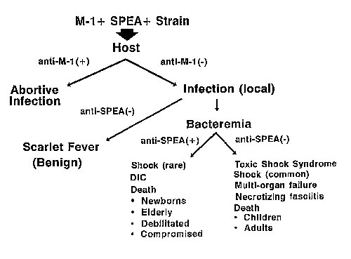 Pathogenesis of scarlet fever, bacteremia, and toxic shock syndrome. M-1+SPEA+=aGAS strain that contains M protein type 1 and streptococcal pyrogenic exotoxin A (SPEA); + anti-M-1 = the presence of antibody to M protein type 1; -anti-M-1 = the absence of antibody to M protein type 1;anti-SPEA+=antibody to SPEA; and DIC = disseminated intravascular coagulation.