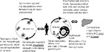Thumbnail of The malaria transmission life cycle.