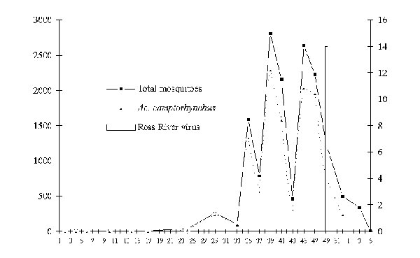 Mean number of adult mosquitoes (total population and dominant species) and isolations of Ross River virus from mosquitoes at Capel–Busselton region, wetland site, January 1995 to January 1996.