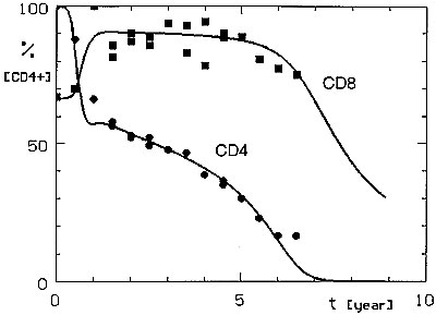 Simulated CD4+ and CD8+ lymphocyte dynamics in HIV infection compared with observed mean T-cell values for CD4+ lymphocytes (circles) and CD8+ lymphocytes (squares).