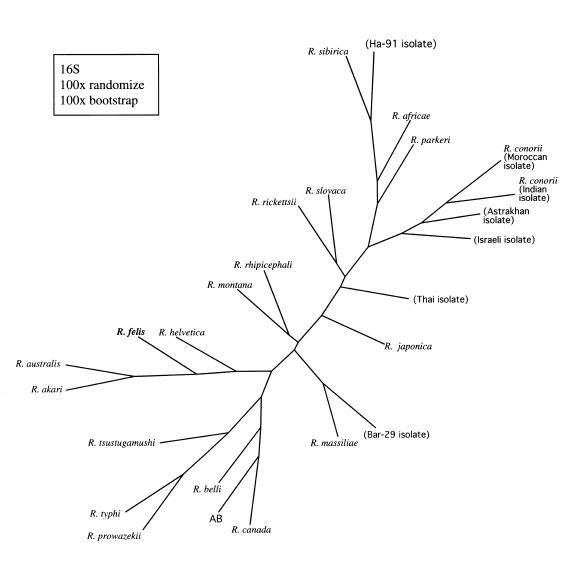 Cladogram Quiz. Cladogram Quiz. Worksheet. Cladogram Worksheet And Key At Mspartners.co