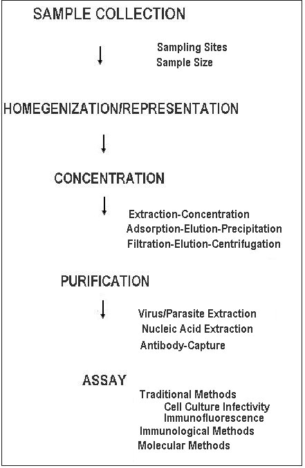 General steps in the isolation of human enteric viruses and parasitic protozoa from foods.