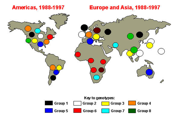 Global distribution of measles genetic groups. Colored circles indicate areas where measles viruses from various genetic groups have been isolated. Viruses not assigned to one of the eight groups are labeled in brown.