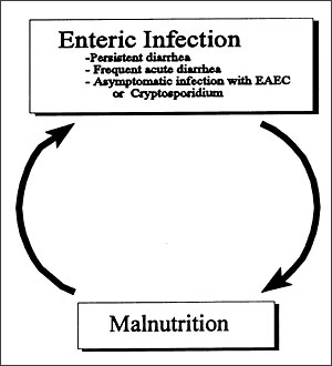 Relationship between diarrhea and malnutrition (31, 60–62).