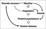 Thumbnail of Simplified hypothetical model of interactions among ecosystem components within disease-endemic areas for rodent-borne zoonotic disease. Left-hand side of model demonstrates potential use of remote sensors (satellites) for predicting relative risk for human disease.