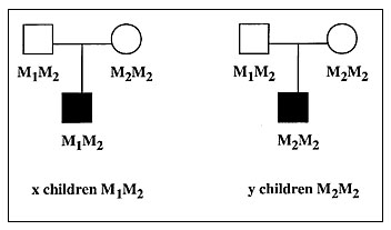 Principle of the transmission disequilibrium test (TDT) for investigating association between a disease and allele M1. The sample consists of x+y families with one affected child and two parents. For ease of presentation, we assume that only one parent is heterozygous for M1 (e.g., M1M2), although the second parent could be used for the test if he were himself heterozygous for M1. There are x affected children who have received allele M1 from their M1M2 parent and y who have received M2. The TDT