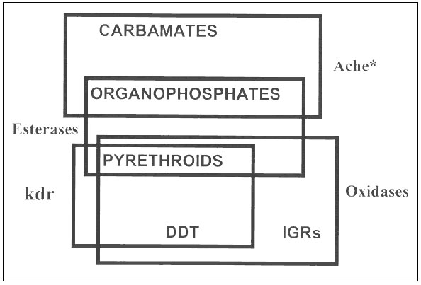 Cross-resistance relationships of commonly used classes of insecticides.
