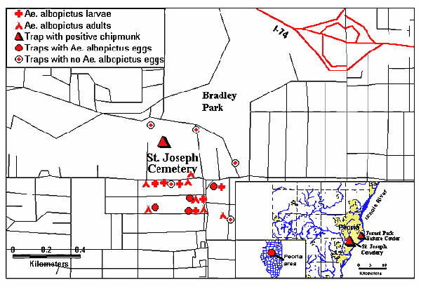 Locations in Peoria, Illinois, where Aedes albopictus larvae and adults were found and where a La Crosse–positive chipmunk was trapped. Location of oviposition traps are shown, including traps where no Ae. albopictus eggs were deposited. Insets show location of Peoria and of the study sites.