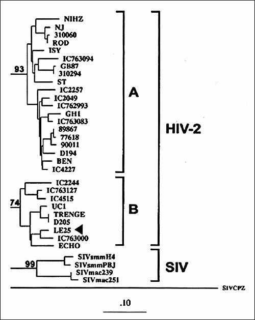 Phylogenetic classification of HIV-2 sequence from Lebanese patient LE25 (arrow) basing on the prot gene (GenBank accession no. AF026912). The tree was generated by the maximum-likelihood method. Numbers at the branch nodes connected with subtypes indicate bootstrap values. The distinct HIV-2 subtypes are delineated. The scale bar indicates an evolutionary distance of 0.10 nucleotides per position in the sequence. Vertical distances are for clarity only.
