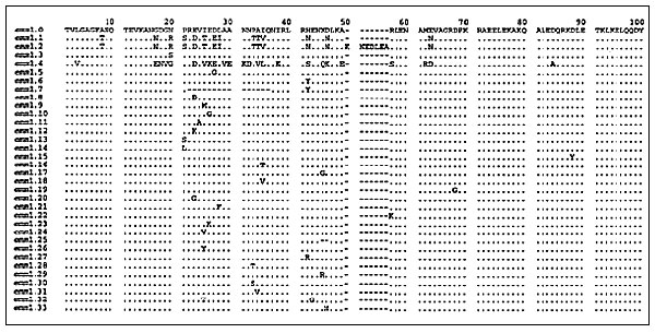 Alignment of inferred N-terminal amino acid sequences of 33 alleles of emm1. The region shown represents amino acids 27 through 110 (GenBank accession number X07860). Six of the emm1 alleles were identified in this study, several were described previously (1,5,12), and others were from ongoing analysis of emm1 in M1 strains from global sources. Amino acid residues identical to those encoded by emm1.0 are represented by periods.