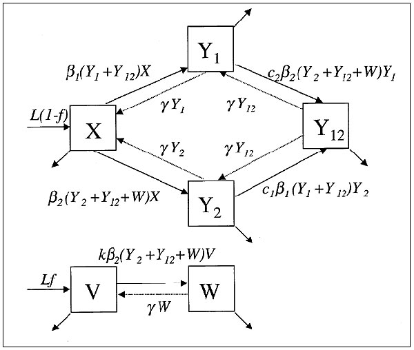 The structure of the mathematical model described in the text and in greater detail (30).