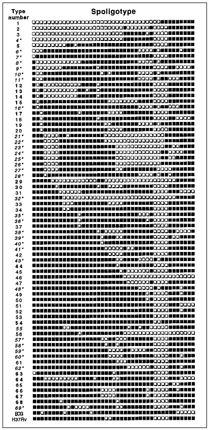 Nomenclature of the spoligotype database (from 1 to 69) based on published spoligotypes (n = 393) and on spoligotypes generated during this investigation (n = 218). The corresponding hybridization patterns for oligonucleotides 1 to 43 (black square, hybridizing; empty square, nonhybridizing) are shown. Type 1 is unique for the Beijing type pattern, whereas type 69 is unique for the Manila type pattern. Bold characters illustrate patterns that have so far been noticed only in Caribbean and neighb