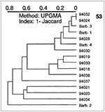 Thumbnail of A dendrogram illustrating spoligotyping results of 16 Mycobacterium tuberculosis clinical isolates from Barbados and Surinam. From top: type 53, ubiquitous; isolates Barb.3 and 94030 belong to specific types 68 and 15, respectively; isolates 94018, 94020, 94034, and Barb.1 belong to ubiquitous types 19, 1, 3, and 61, respectively.