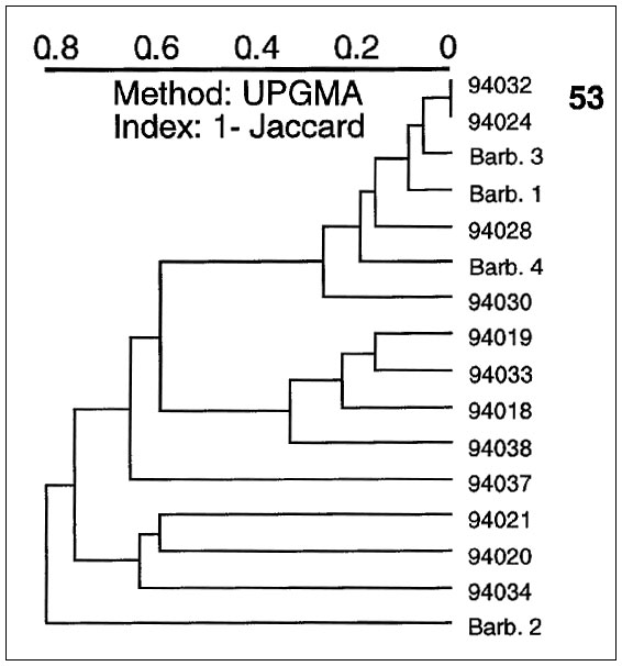A dendrogram illustrating spoligotyping results of 16 Mycobacterium tuberculosis clinical isolates from Barbados and Surinam. From top: type 53, ubiquitous; isolates Barb.3 and 94030 belong to specific types 68 and 15, respectively; isolates 94018, 94020, 94034, and Barb.1 belong to ubiquitous types 19, 1, 3, and 61, respectively.
