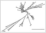 Thumbnail of A preliminary phylogenetic tree obtained by the neighbor-joining algorithm on the basis of the 1-Jaccard index (Sj=a/a+c, where a is the number of simultaneously positive characters and c is the number of discrepancies), which is not exhaustive for all existing phylogenetic links. A total of 70 shared spoligotypes were analyzed (69 types shown in Figure 2 and Mycobacterium bovis BCG).