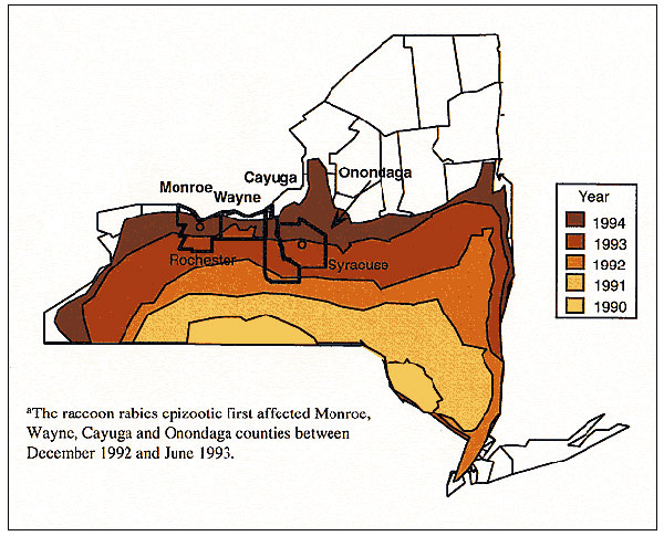 New York State raccoon rabies epizootic progression (1990-94). The raccoon rabies epizootic first affected Monroe, Wayne, Cayuga, and Onondaga Counties between December 1992 and June 1993.
